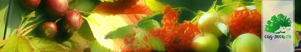Плоды лесосада