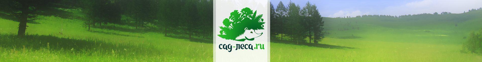 Рубрика: ЛЕСНОЙ ДНЕВНИК