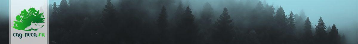 Девять аспектов положительного влияния лесов