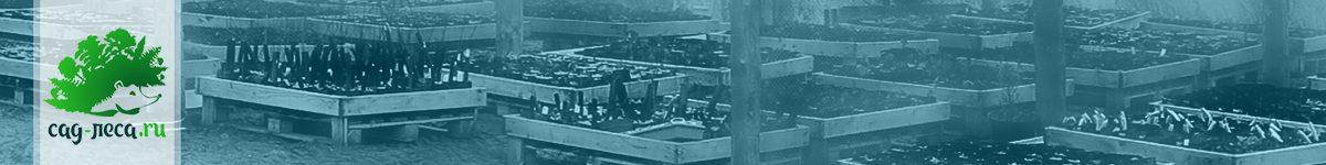 Зимовка саженцев на контейнерной площадке