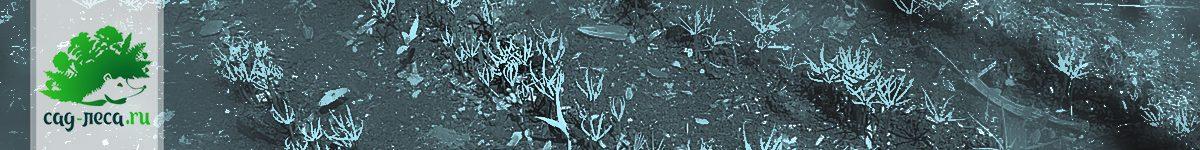 Грибковые болезни у всходов,  удобное укрытие пленкой контейнеров на подоконнике