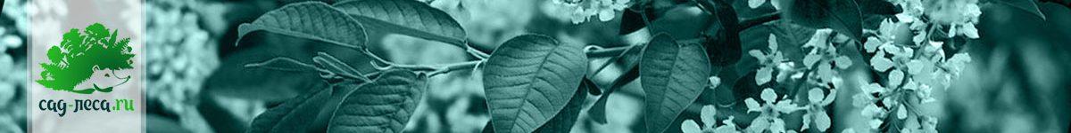 Выращивание черемухи из семян