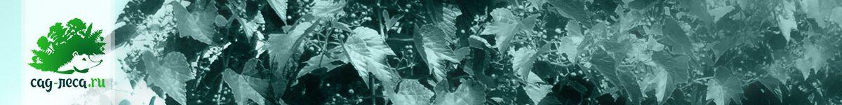 Виноградовник из семян