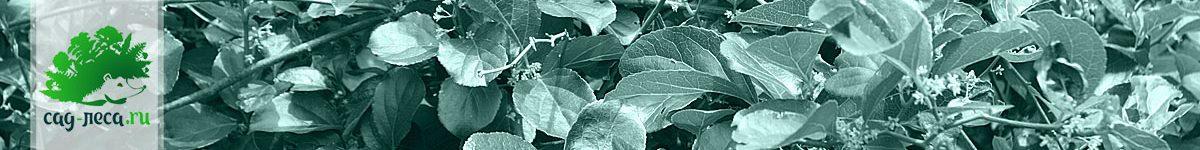 Древогубец из семян